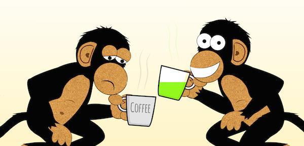 Chimp drinking tea